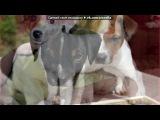 «Основной альбом» под музыку Уматурман - Дождь раскачивает небо (из м/ф Звёздные собаки: Белка и Стрелка). Picrolla